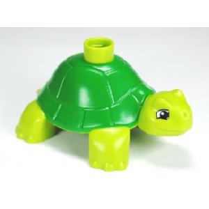 schildpad lime